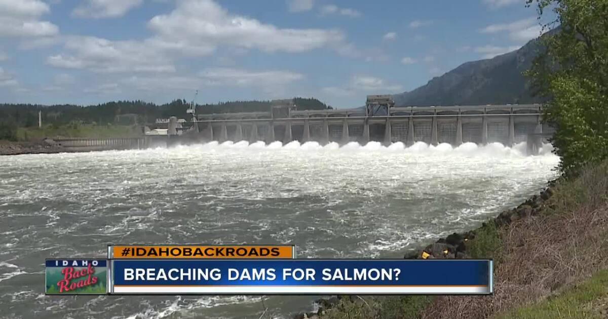 Breaching dams for Idaho salmon?