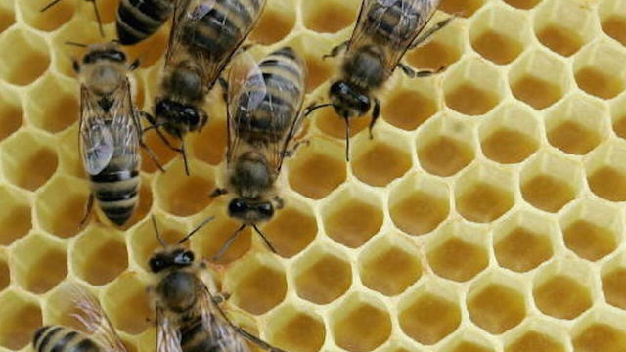 Bees escape in Wal-Mart parking lot, sting several people