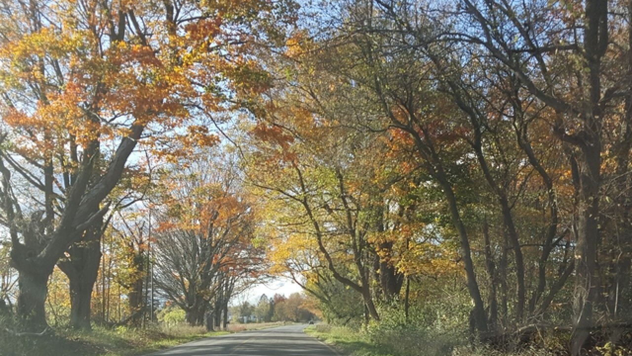 These are the 'can't miss' roads to see the best fall colors in Michigan