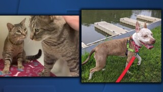 Cleveland APL pets of the weekend