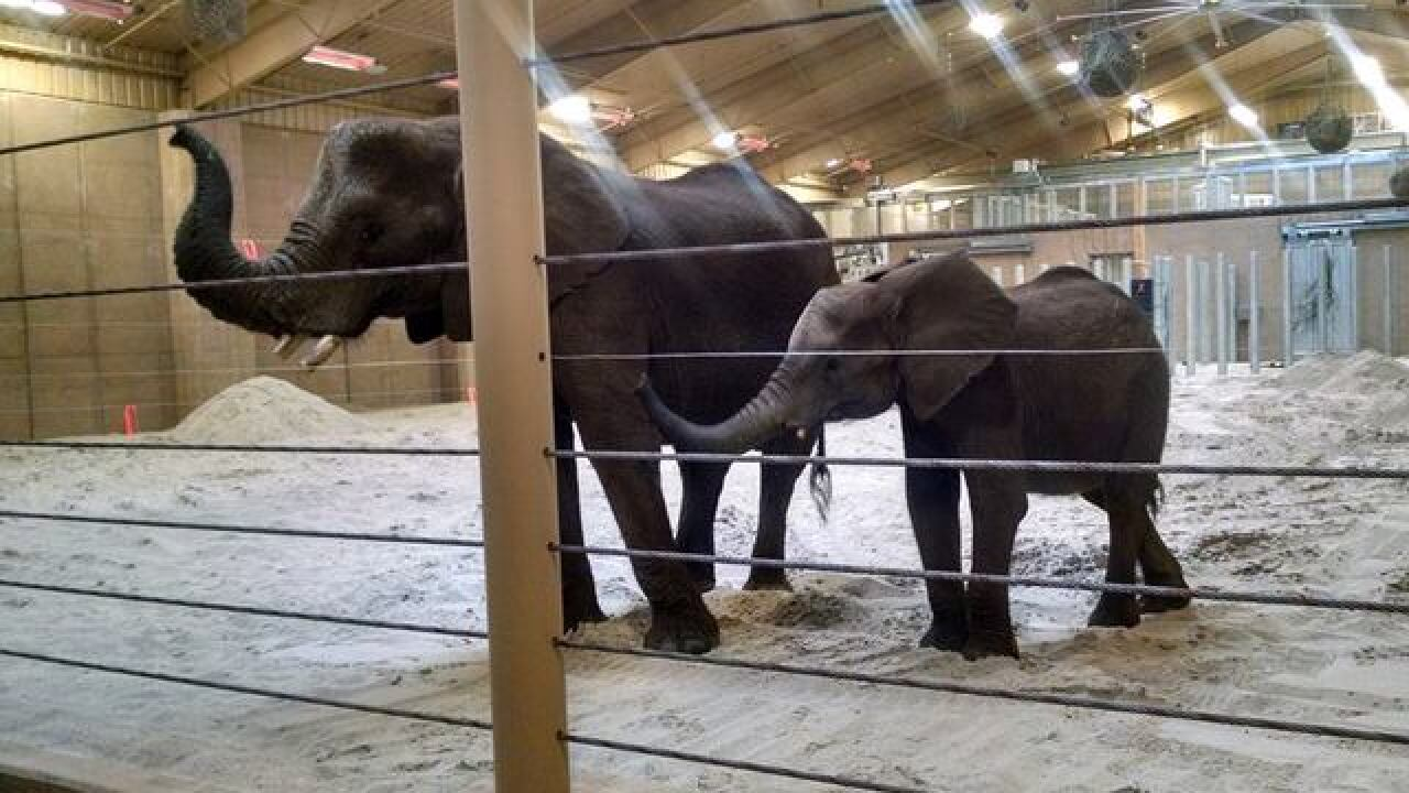 Mom and child are part of zoo's elephant herd