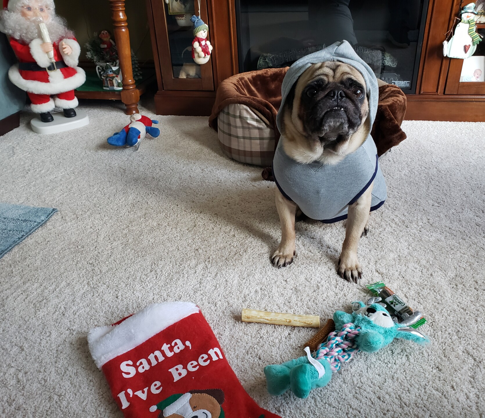 Ziggys new hoodie Santa brought him sent by Kathy Crawford.jpg