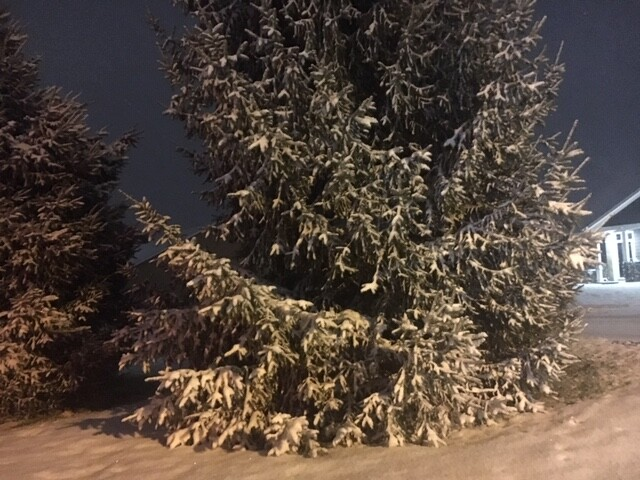 jana snow 1.JPG