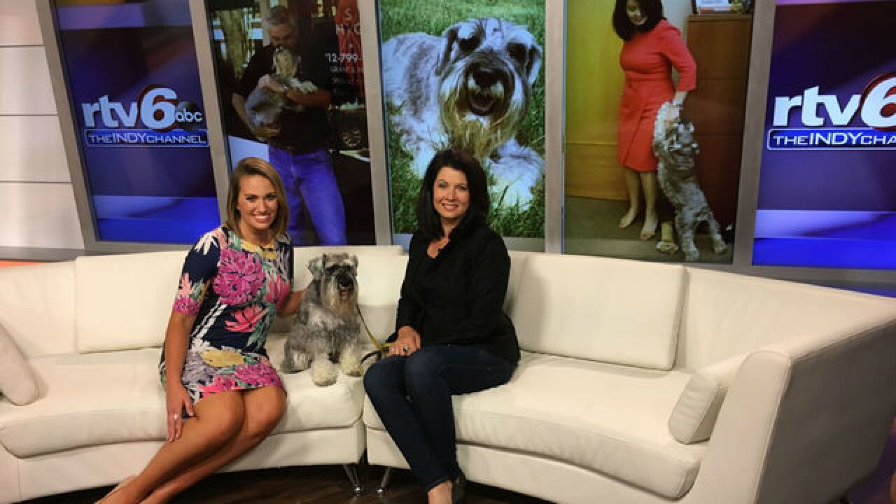 VIDEO: Henry, Indiana's First Dog, stops by RTV6