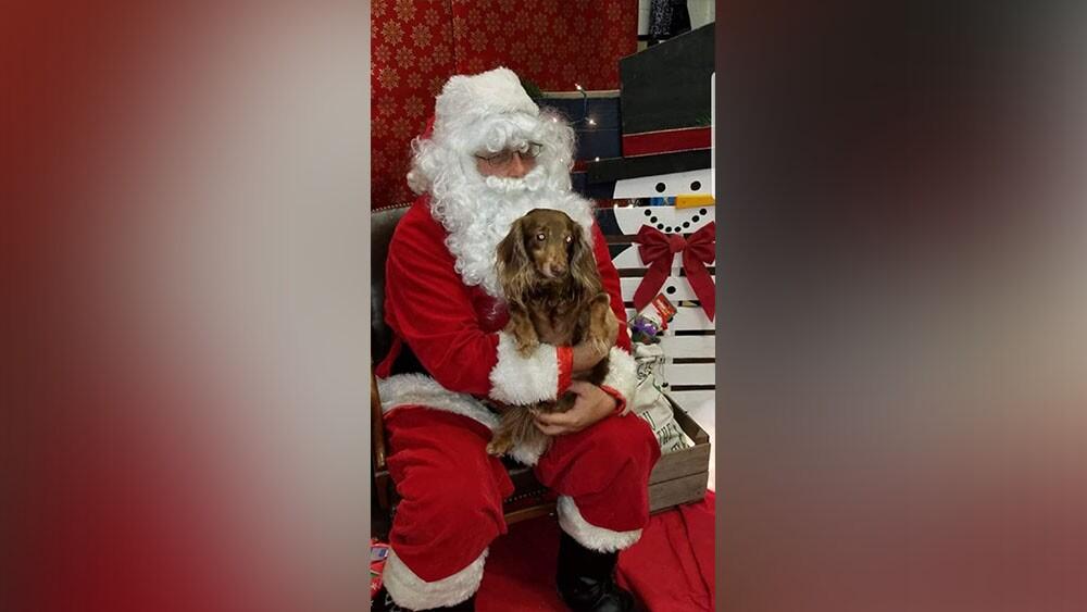 dog with santa.jpg