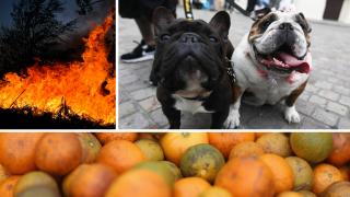 Controlled Burns, Detector Dogs, Citrus Greening Disease