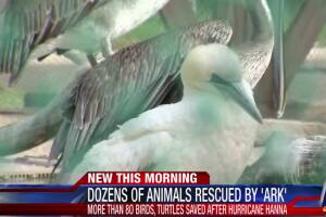 he Amos Rehabilitation Keep rescues more than 80 animals
