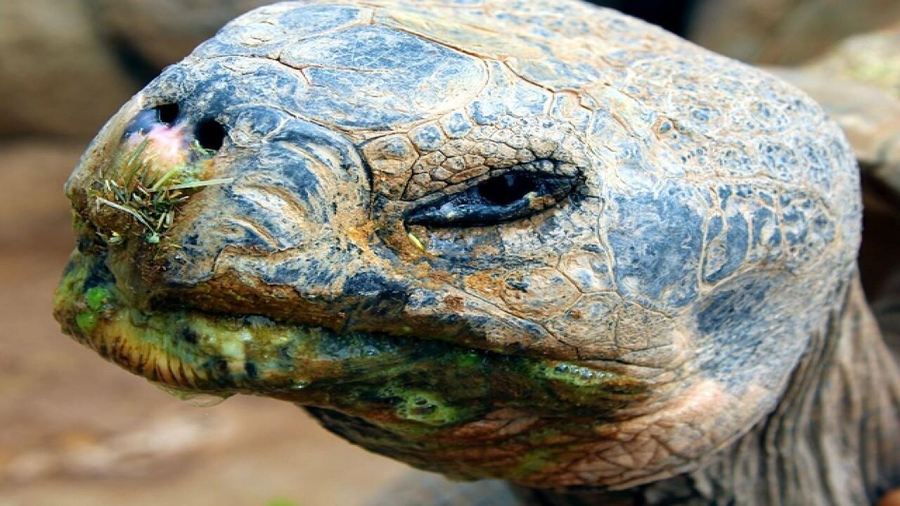 PHX, El Paso zoos to swap tortoises