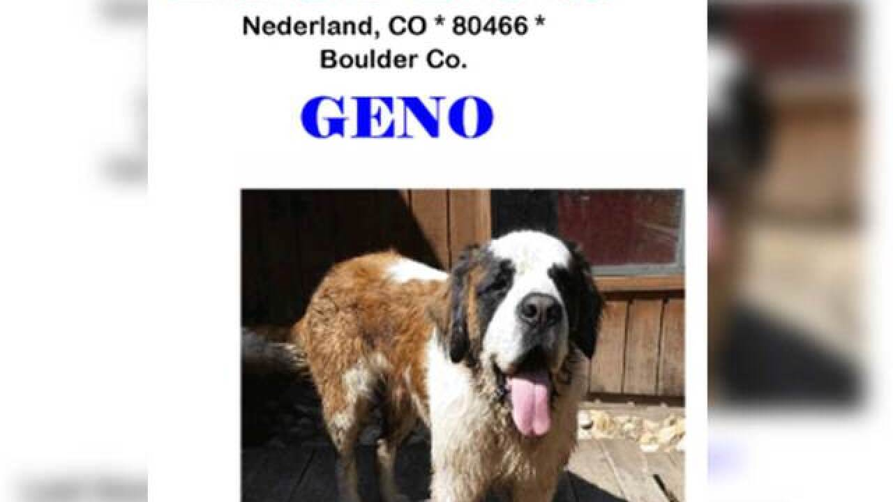 Possible sighting of firefighter's missing dog; Geno lost during Cold Springs Fire