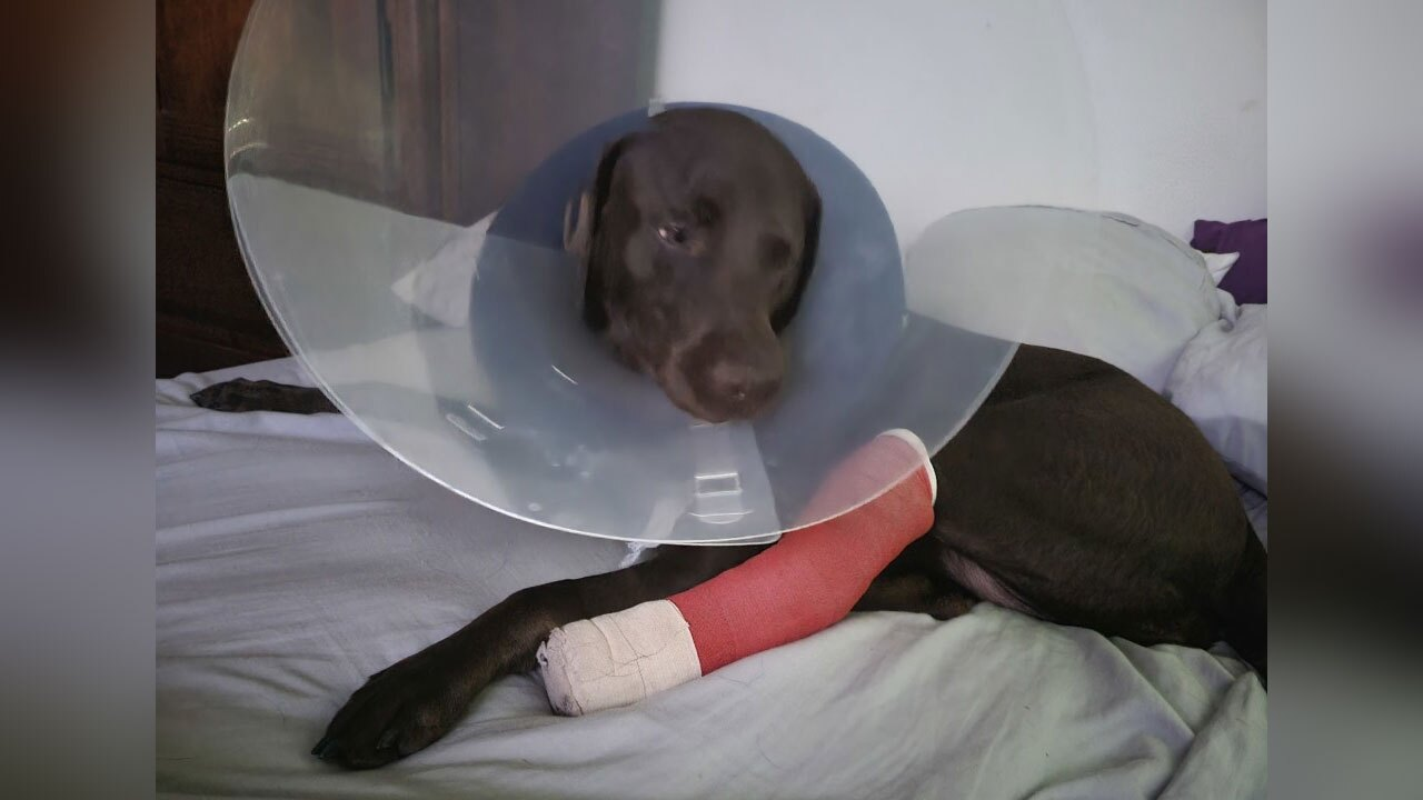 dog-injured-during-daycare-stay--Lisa-Wysong.jpg