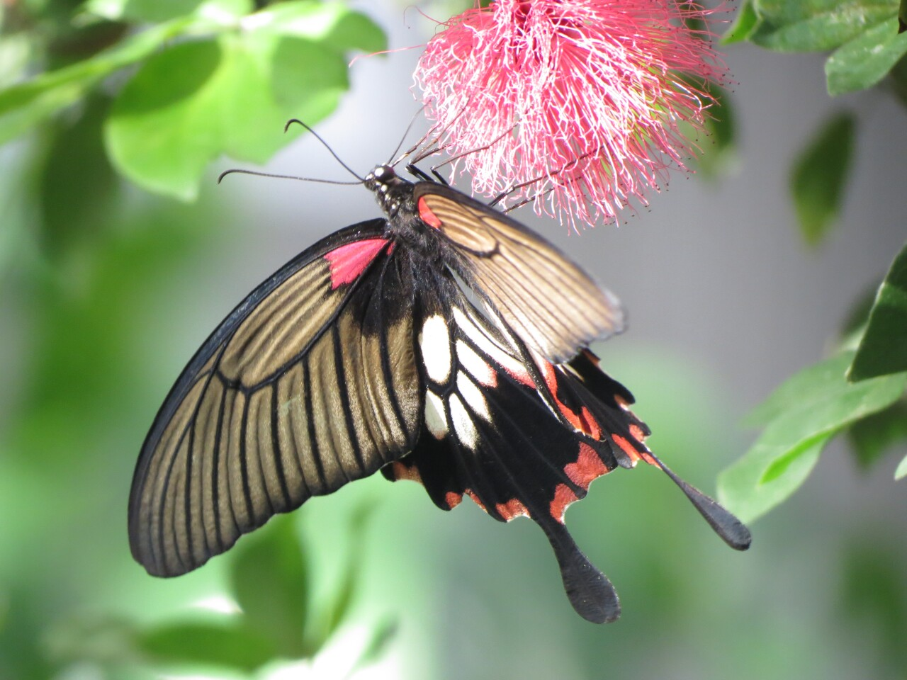 Butterfly House and Aquarium