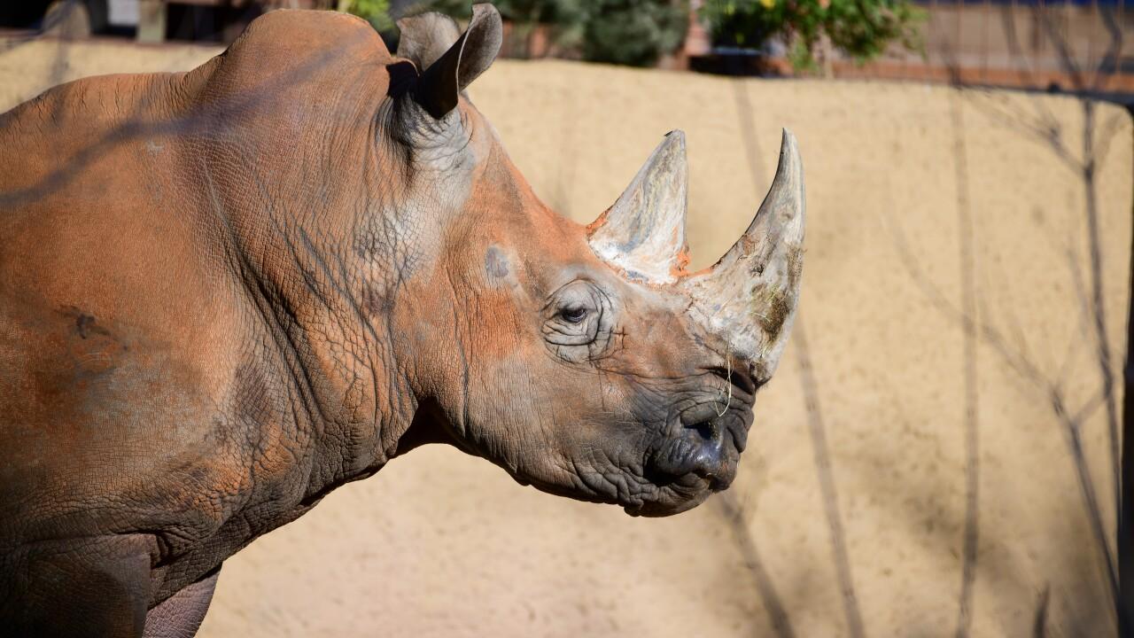 Howie phoenix zoo rhino