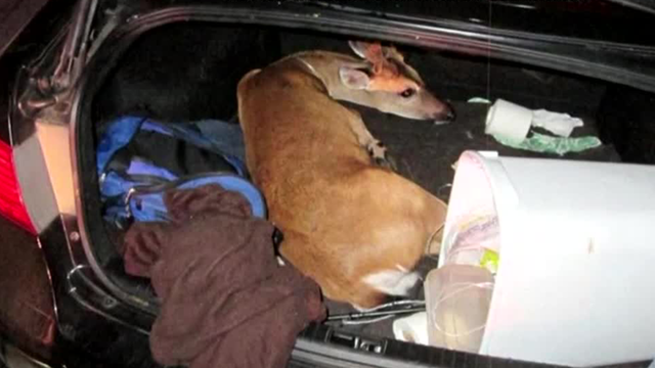2 sentenced in capture of endangered Key deer