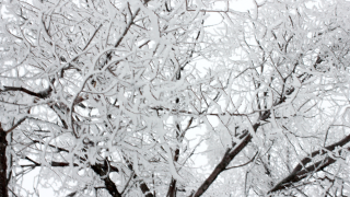 Wx Snow on branches.png