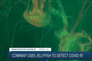 Virginia company using jellyfish to find COVID-19 in air