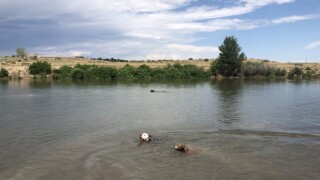 Chatfield State Park Off-Leash Dog Park