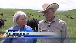 Montana Ag Network: Ranchers improve soil health