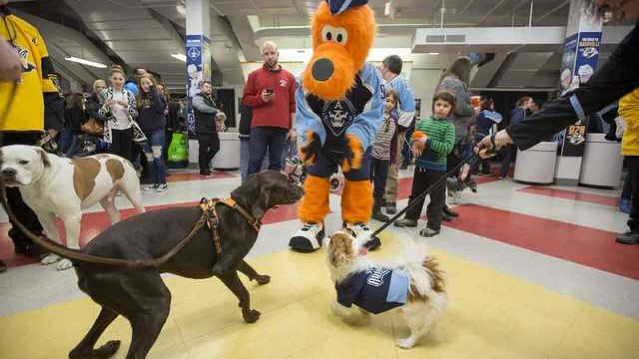 Bring your dog to the Admirals game on Saturday
