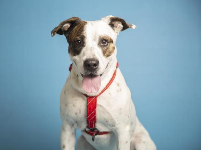 Adoptable pets from Arizona Humane and Maricopa County Animal Care (9/15)