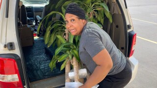 Jesss-Ann-Tyson-loading-plant-into-SUV.jpg