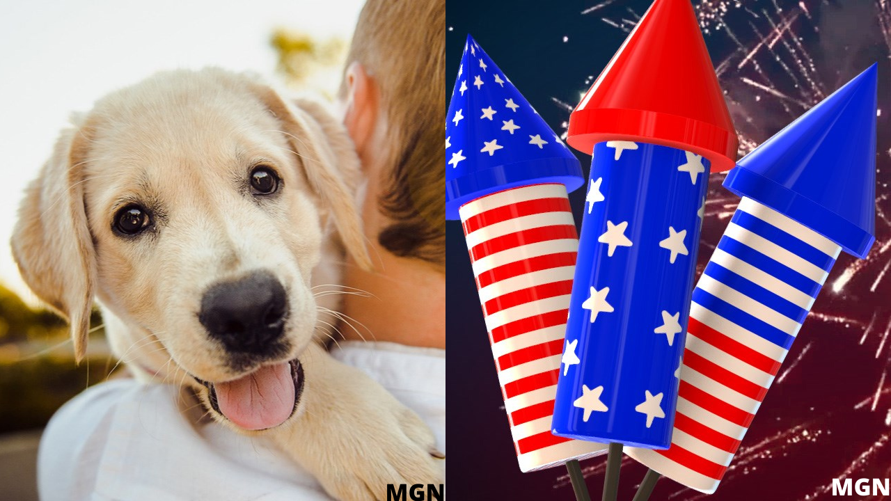 dogs-and-fireworks