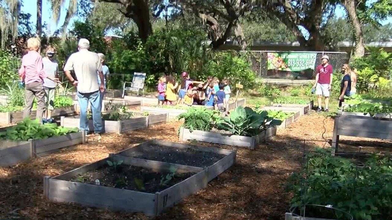 Forrest-Hills-Presbyterian-Church-community-covid-garden.jpg
