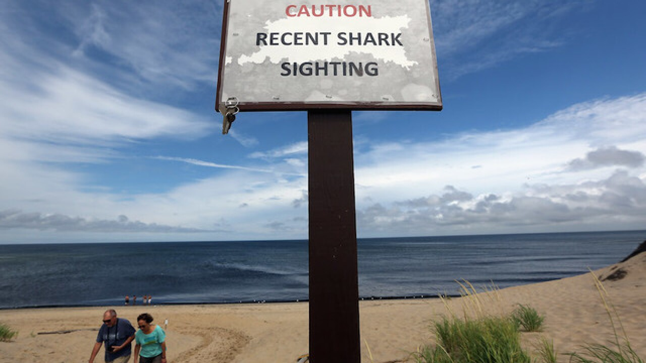 Man dies after suspected shark attack on Cape Cod