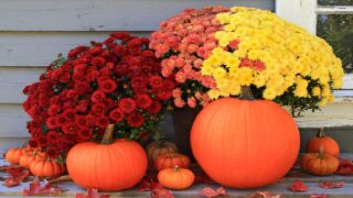 How To Keep Fall Container Mums Growing Through The Winter So You Can Enjoy Them Again Next Spring