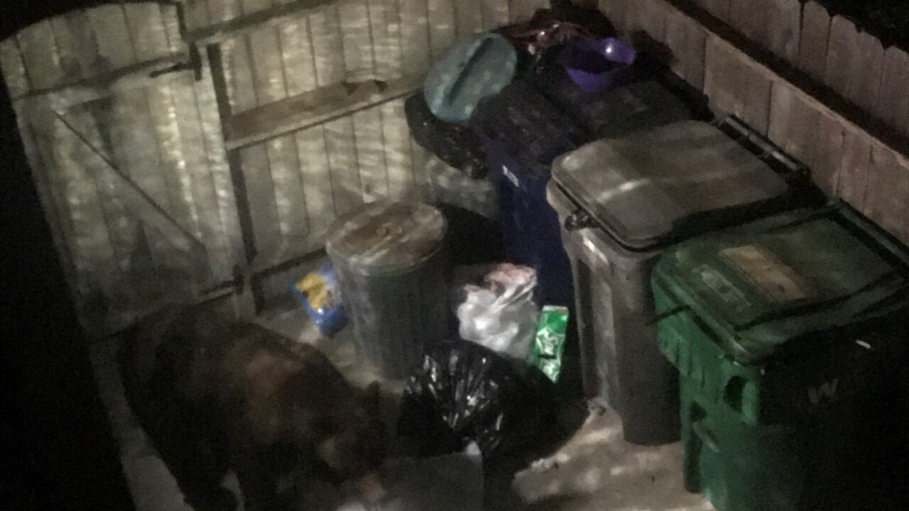 Woman wakes up to bear in her backyard in Vandenberg Village