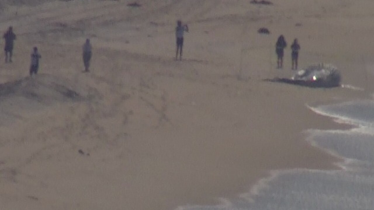 LIVE: Dead whale at Silver Strand State Beach