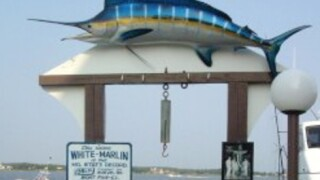 Trial begins in $2.8M White Marlin Open dispute