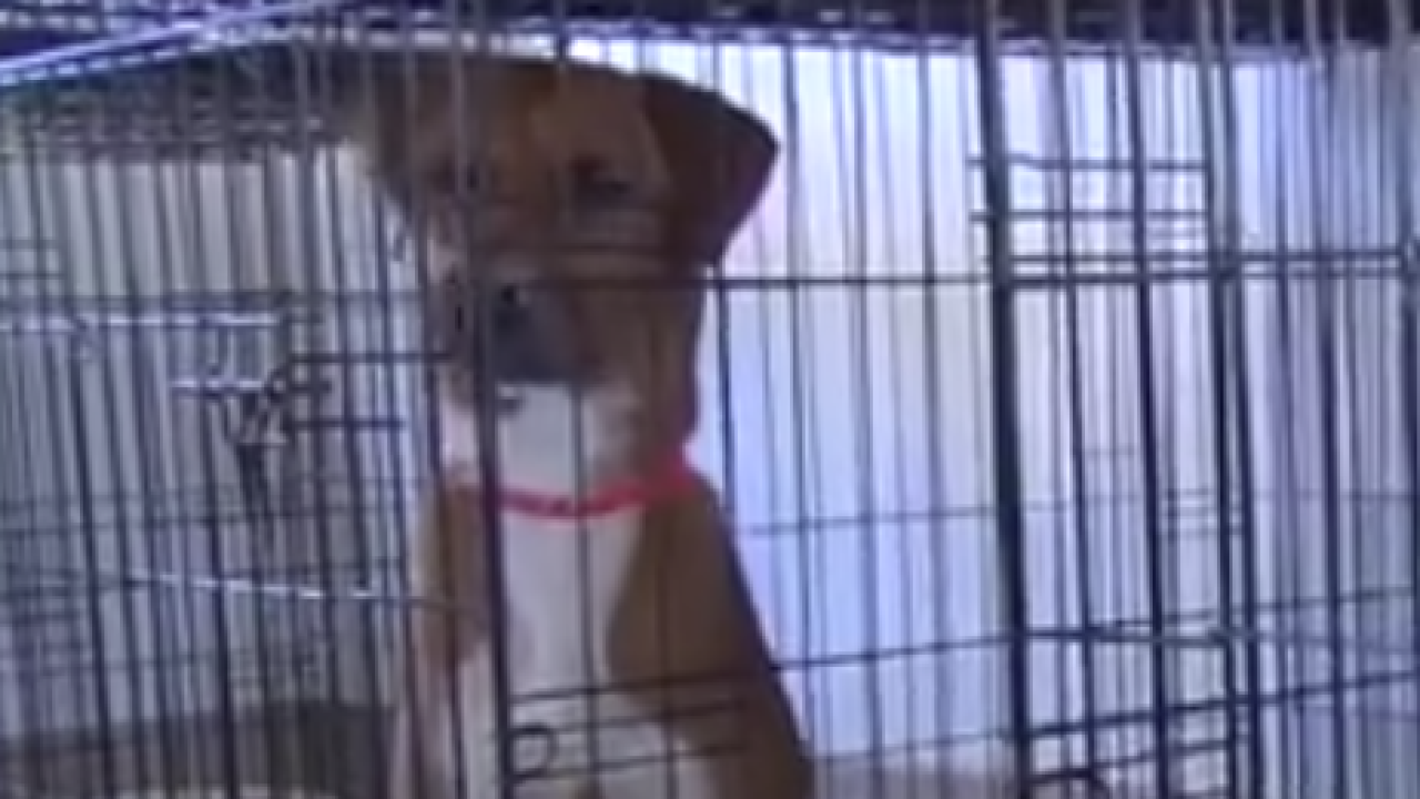 Dogs rescued from the Bahamas arrive in Fort Pierce