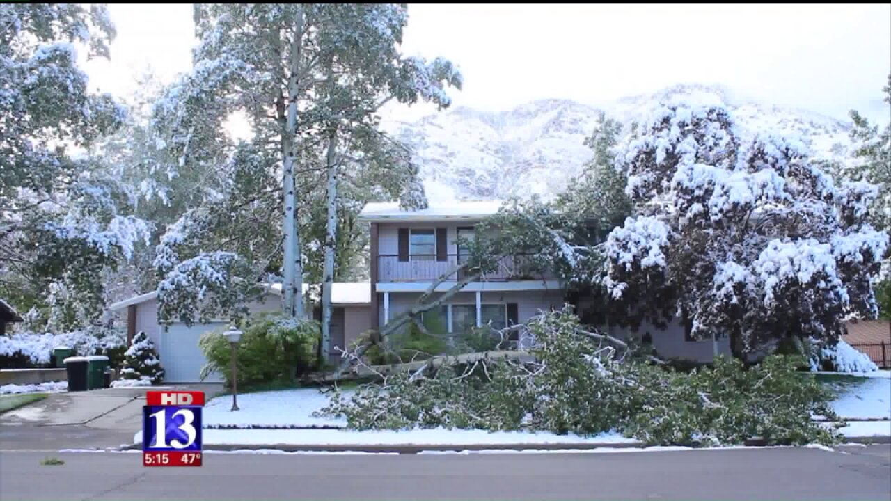Spring snowstorm causes downed trees and power outages in CacheValley