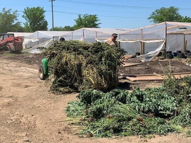Illegal marijuana-growing farm in Muskogee County