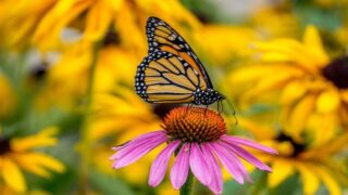 9 Plants That Attract Butterflies