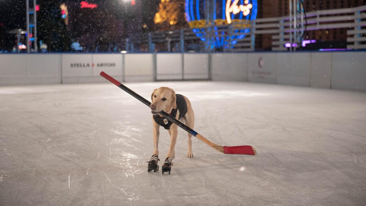 The Ice Rink - Benny The Ice Skating Dog (1).jpg