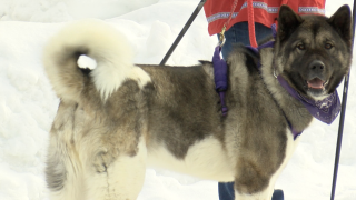 Big crowds expected at Flathead Classic Sled Dog Races