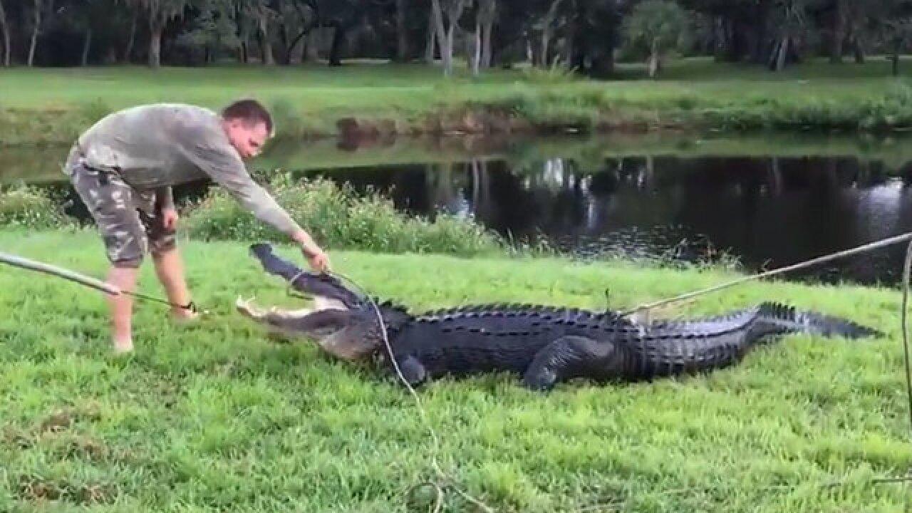 Man bitten by 11-foot alligator in Florida
