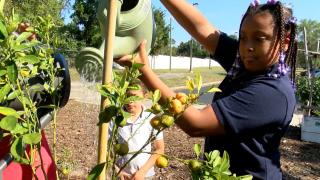 kids growing vegetables in garden