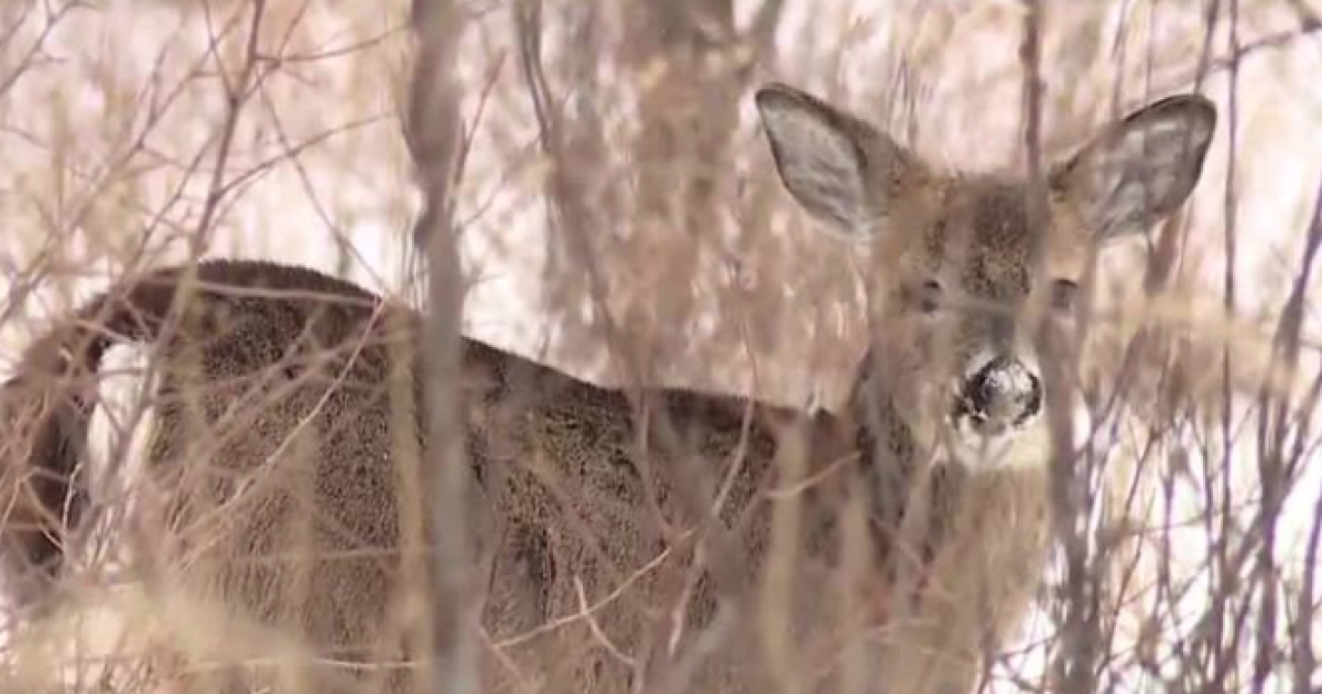 Animal rights activists, hunters opposed to a controversial deer killed at Kensington Metropark