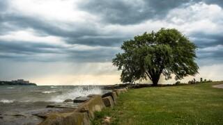 Edgewater tree.