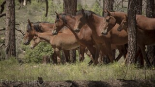 Wild Horses in Northern Arizona