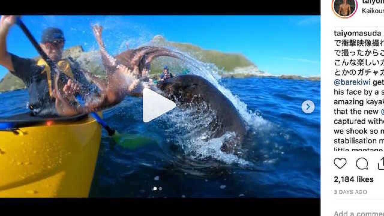 Octopus, seal smack kayaker's face; GoPro camera catches moment on video