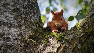 squirrel-4395887_960_720.jpg