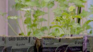 Montana Ag Network: Growing a better community through ag literacy