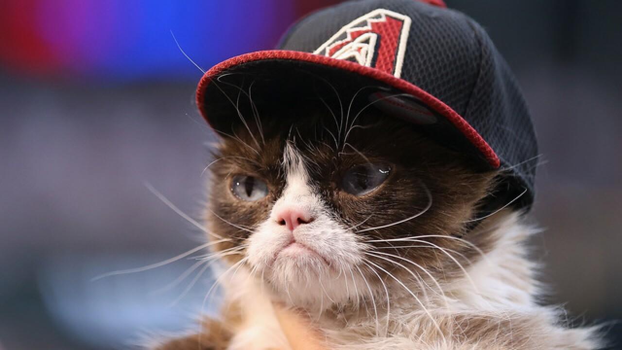 Grumpy Cat snatches lump of cash in CA