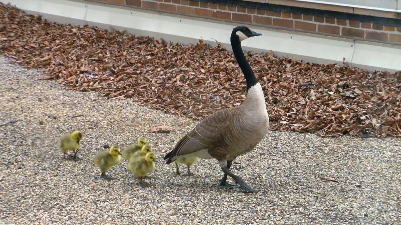 Gertie and Kids 1