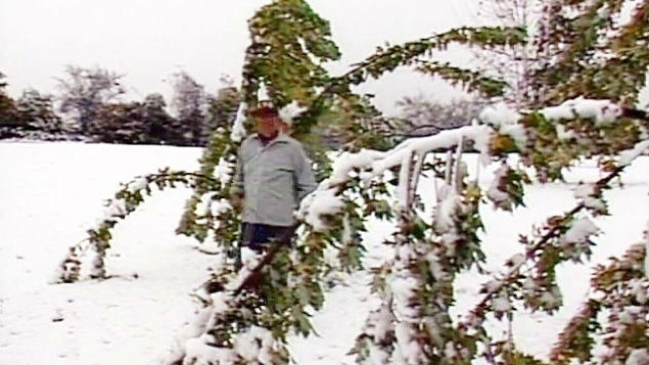 Snow_tree_101989.jpg