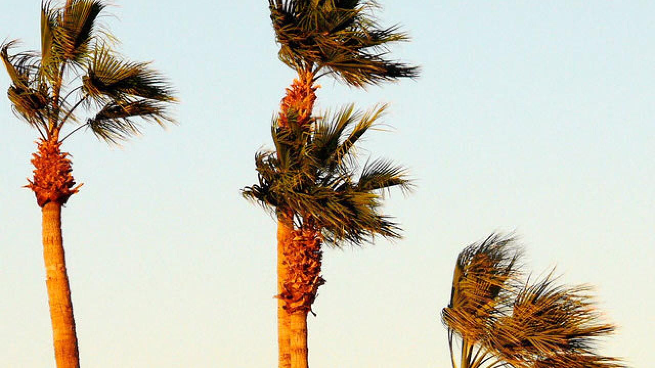 san diego tree wind windy