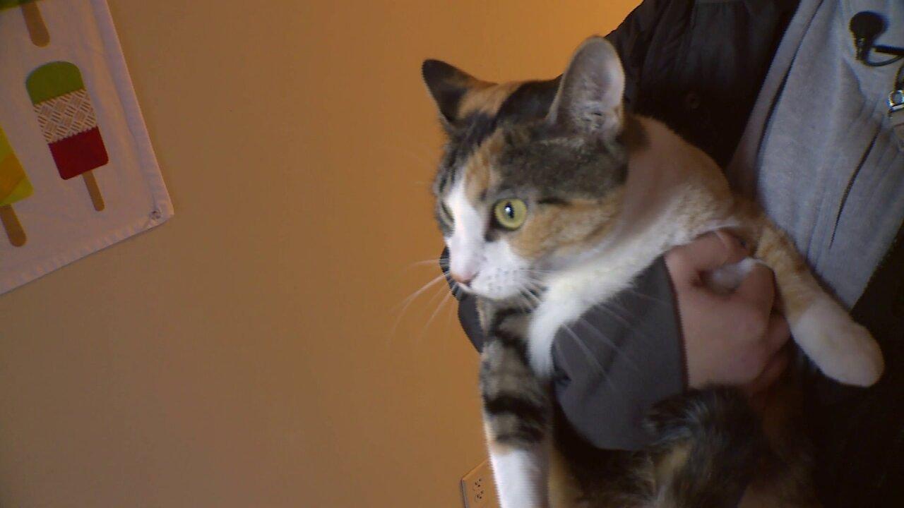'Kahlua' the cat alerts VCU student to stranger inside herbedroom
